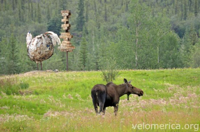 Chicken & Moose